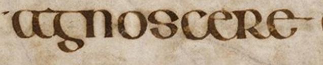 agnoscere 01